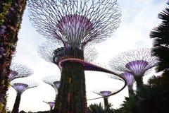 Arboleda de Supertrees en los jardines por la bahía, en Singapur Imagen de archivo libre de regalías