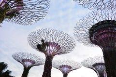 Arboleda de Supertrees en los jardines por la bahía, en Singapur Fotos de archivo libres de regalías