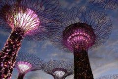 Arboleda de Supertrees en los jardines por la bahía, en Singapur Foto de archivo libre de regalías