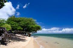 Arboleda del árbol del heliótropo en la playa de Anini Fotografía de archivo