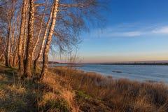 Arboleda del abedul en el banco del río, encendido por un sol caliente de la primavera Imágenes de archivo libres de regalías