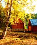 Arboleda del abedul en el otoño Foto de archivo
