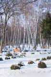 Arboleda del abedul en invierno Foto de archivo libre de regalías