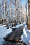 Arboleda del abedul en invierno Fotos de archivo
