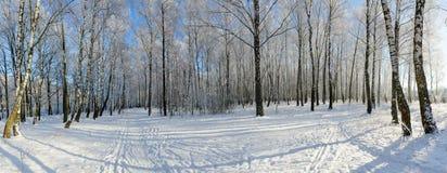 Arboleda del abedul en la escarcha, paisaje del invierno Imagenes de archivo