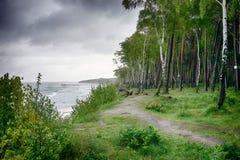 Arboleda del abedul en la orilla del mar Báltico tempestuoso gris Imágenes de archivo libres de regalías