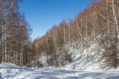 Arboleda del abedul en las montañas Foto de archivo
