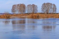 Arboleda del abedul en los bancos del río Foto de archivo