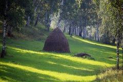 Arboleda del abedul en los Urales Fotos de archivo libres de regalías