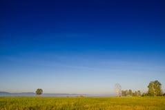 Arboleda del abedul y prado verde en la niebla de la mañana y el cielo con Imágenes de archivo libres de regalías