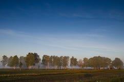 Arboleda del abedul y prado verde en la niebla de la mañana y el cielo con Imagen de archivo
