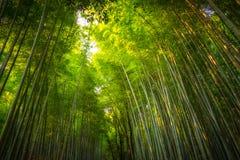 Arboleda del bambú de Arashiyama imágenes de archivo libres de regalías