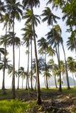 Arboleda del coco Fotos de archivo libres de regalías
