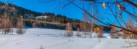 Arboleda del invierno Imagenes de archivo