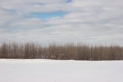 Arboleda del invierno foto de archivo