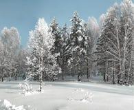 Arboleda del invierno con los abedules y los abetos en nieve profunda Imagen de archivo libre de regalías
