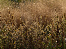 Arboleda del otoño fotografía de archivo libre de regalías