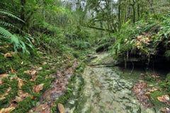 arboleda del Tejo-árbol Foto de archivo libre de regalías