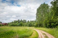 Arboleda en el viento, Letonia del abedul Imagen de archivo libre de regalías