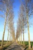 Arboleda en Güeldres, los Países Bajos Imagen de archivo libre de regalías