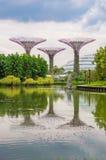 Arboleda estupenda del árbol en jardines por la bahía foto de archivo libre de regalías