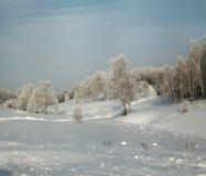 Arboleda nevada del abedul en la cuesta del invierno Imagen de archivo libre de regalías
