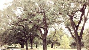 Arboleda pacífica de árboles Imagen de archivo