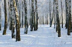 Arboleda pintoresca del abedul del invierno en escarcha Fotografía de archivo