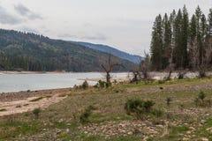 Arboleda por el lago Fotos de archivo