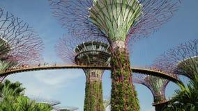 Arboleda Singapur de Supertree almacen de metraje de vídeo