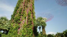 Arboleda Singapur de Supertree metrajes