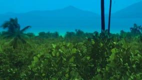 Arboleda tropical hermosa y vista al mar de la palma de la isla almacen de video