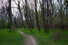 Arboleda verde Imagen de archivo