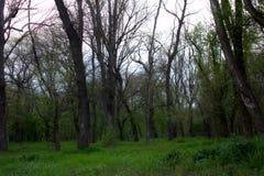 Arboleda verde Foto de archivo libre de regalías