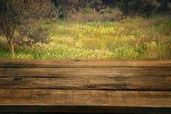 Arboleda verde oliva con la tabla de madera Imagen de archivo