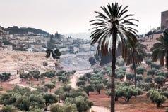 Arboleda verde oliva en el valle de Kidron Es un día desagradable Foto de archivo libre de regalías