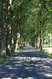 Arboleda vieja en Güeldres, los Países Bajos Imagen de archivo libre de regalías