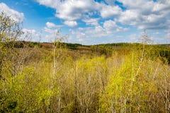 Arboleda y bosque del abedul de la primavera debajo del cielo azul Imagen de archivo