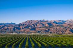 Arboledas de la fruta cítrica de California fotos de archivo libres de regalías