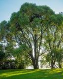 Arborétum à Tampere Photographie stock libre de droits