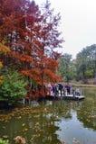 Arborétum d'Ataturk Arbres d'automne autour de lac Photos stock