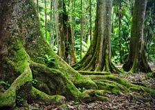 Arborétum de Keanae, Maui, Hawaï images stock
