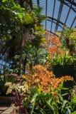 Arborétum et jardin botanique images libres de droits