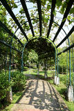 Arbor with arbored walk. The shade and shadow of plants and trees of the  arbor in a garden Royalty Free Stock Photography