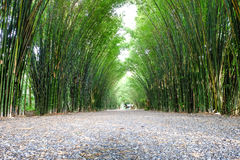 Arbor bamboo forest. That occurs naturally in Chulabhorn wanaram Temple, Nakhon Nayok province and the length of several meters. Thailand Stock Photo