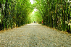 Arbor bamboo forest. That occurs naturally in Chulabhorn wanaram Temple, Nakhon Nayok province and the length of several meters. Thailand Stock Image