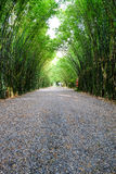 Arbor bamboo forest. That occurs naturally in Chulabhorn wanaram Temple, Nakhon Nayok province and the length of several meters. Thailand Stock Photos