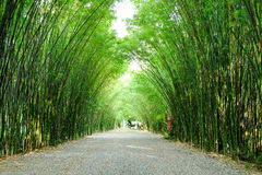 Arbor bamboo forest. That occurs naturally in Chulabhorn wanaram Temple, Nakhon Nayok province and the length of several meters. Thailand Royalty Free Stock Photos