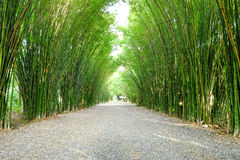 Arbor bamboo forest. That occurs naturally in Chulabhorn wanaram Temple, Nakhon Nayok province and the length of several meters. Thailand Stock Photography