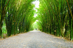 Arbor bamboo forest. That occurs naturally in Chulabhorn wanaram Temple, Nakhon Nayok province and the length of several meters. Thailand Royalty Free Stock Images